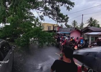 Pohon  tumbang menutup badan jalan di Desa Timuato Kecamatan Telaga Biru Kabupaten Gorontalo